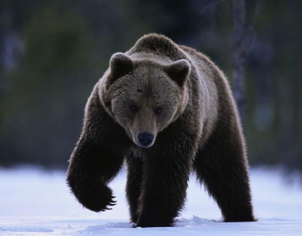 熊】熊に出会った時の対処法とは...